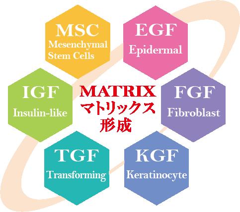 MATRIX マトリックス形成